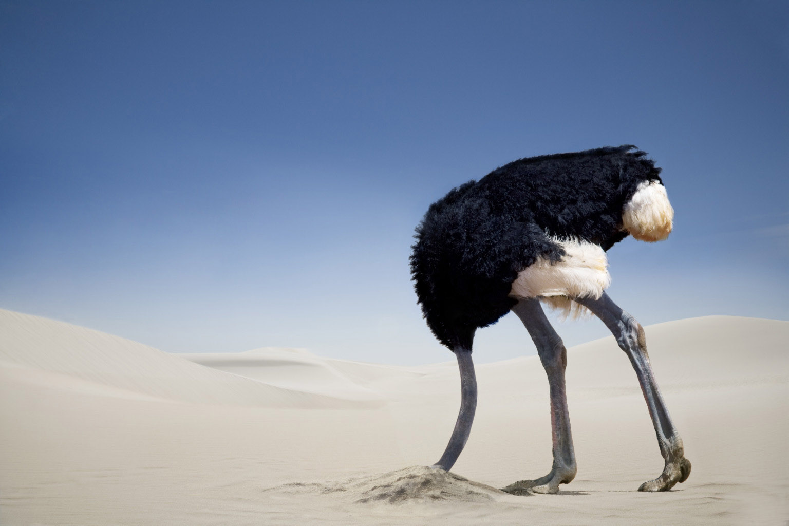 http://www.pre-tend.com/wp-content/uploads/2015/02/ostrich-head-in-sand-Ostriches-not-stick-its-head-in-the-sand-when-in-danger.jpg